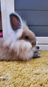 Welcome Ryne The Bunny